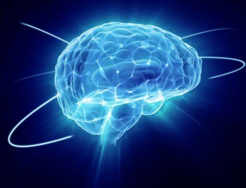 """Cerebro azul"" resuelve un problema de neurociencia centenario."