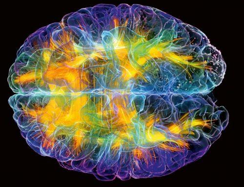 Actividades que estimulan el cerebro para aprender.