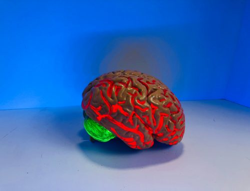 En los supervivientes de un accidente cerebrovascular con afasia ciertas regiones del cerebro deben estar intactas  para que el aprendizaje del habla tenga éxito.