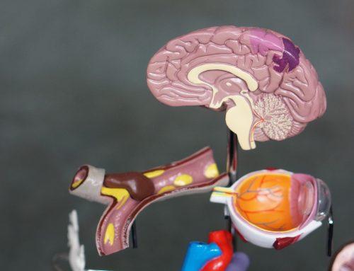 Cómo se puede reconectar el cerebro después de haber extraído la mitad del mismo