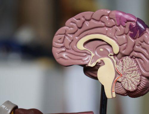 Una nueva terapia celular mejora la memoria y detiene las convulsiones después de un TCE