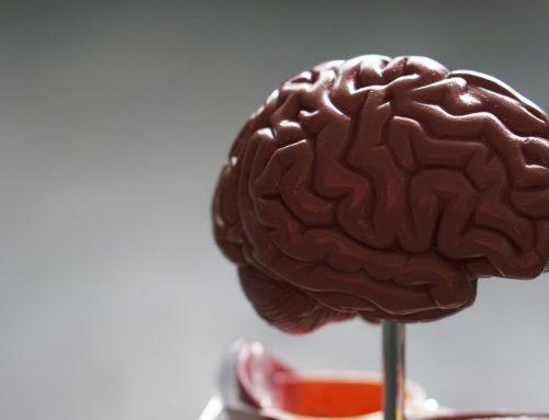 Un estudio afirma que más células madre mejoran el aprendizaje y la memoria en ratones viejos