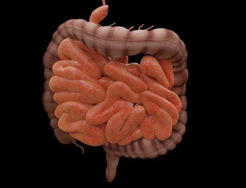 Una investigación pionera revela que ciertos genes humanos están relacionados con las bacterias intestinales