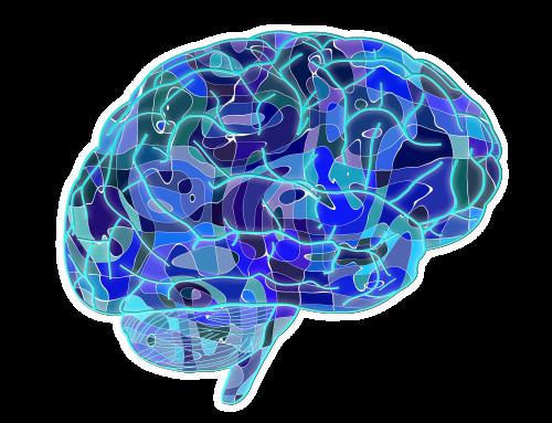 Identifican dos nuevos genes implicados en enfermedades del desarrollo del cerebro